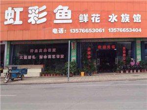 469235虹彩鱼鲜花店