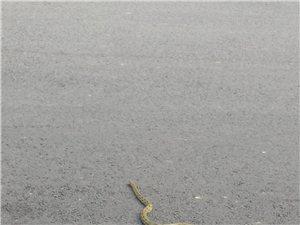 吓死宝宝了,突然门市就爬来一条蛇。
