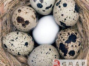 自家�B的�g��蛋5元一斤