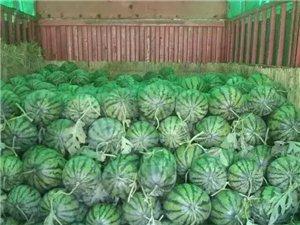 無籽西瓜 有籽西瓜,蒜曇 ,新鮮大蒜 已大量上市