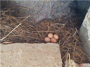 粗粮散养笨鸡蛋