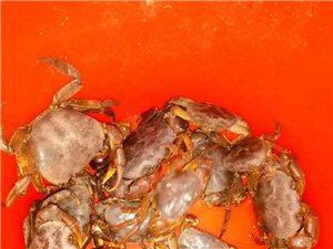 野生蝦蟹黃鱔出售