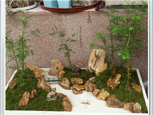水杉蜡石盆景