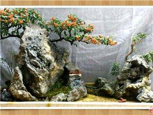 水旱盆景,各類觀賞石