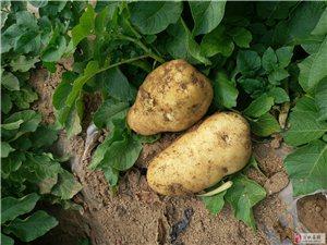 供�����|土豆