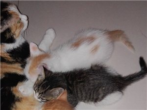 可爱小猫等认领,绝对免费