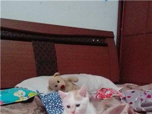 可爱小猫等领养,绝对免费