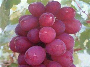 給你一場無與倫比的葡萄盛宴