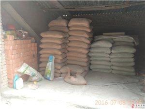出售金龍水泥,河沙,鋼沙,紅磚