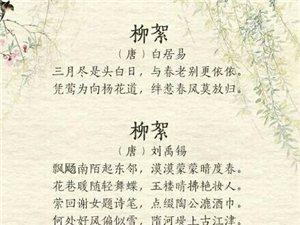 飞絮诗词30首,惹人嫌的在诗人的眼里是这样的
