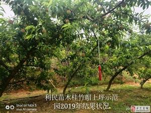 新品种果树苗木