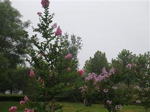 夏天的花花