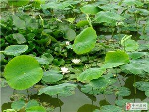 浮花浪蕊――花�t柳�G的平川�^