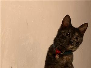 小猫小猫找老板