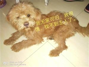 谁家的宠物狗在流浪?是主人抛弃了还是走丢了?