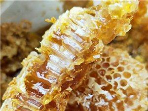 偶遇好物-野生蜂蜜。