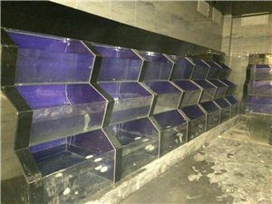 專業安裝海鮮池