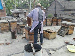 魏庄蜂场蜂蜜直销