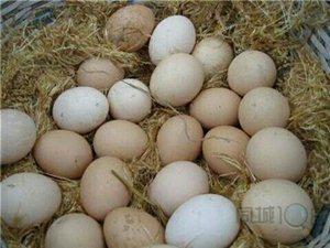誰要土雞蛋