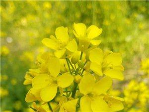 路边的野花