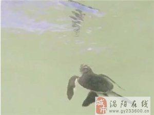 坦桑尼亚新生小龟成群结队爬向大海