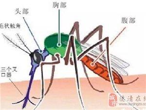 到底谁更招蚊子?千年争论终于有答案了