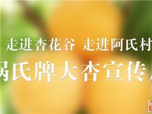 #星期天到西安#�{田�A胥杏花谷的大�y杏就要熟了,你�不�怼�…