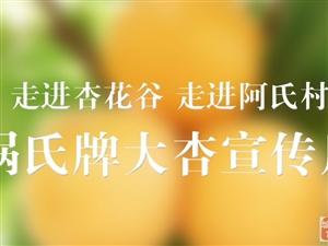 #星期天去西安#听说蓝田华胥杏花谷的娲氏大杏就要熟了,等你哦……