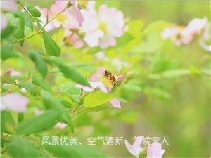 #6月去西安#听说蓝田华胥杏花谷的娲氏大银杏就要熟了,等你哦……