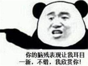 不要看,笑死不偿命哈!!!