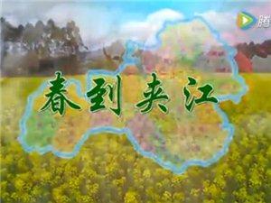 """【高清视频】""""春到夹江""""拍摄夹江帝国,漂亮惨了~"""