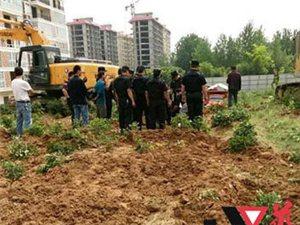 南阳桐柏城郊乡一茶园被毁,导致无望老农喝农药欲自杀