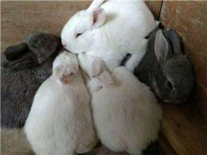 太阳城游戏网站大中小兔子