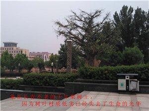中国板栗博物馆现状