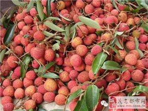 茂名荔枝超给力,把市场的半壁江山都拿下了!