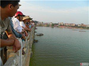 2016端午镇桥龙舟赛