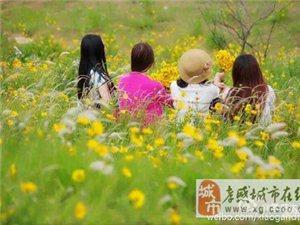 #�S手拍孝感#大悟,花山