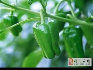 惊!青椒跟它一起吃,软化血管、年轻20岁