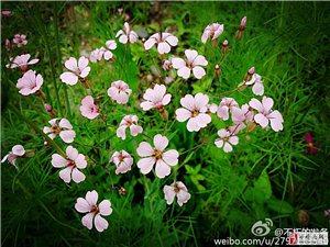 在艳阳下,任性开放的花花草草!