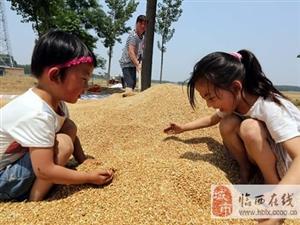 诗词:麦收有感