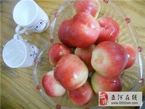 桃园又大又红又甜的桃儿约你来吃
