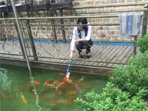 重磅消息!光山县城出现一群不明稀有物种???