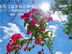 王裕超三角梅拍摄作品精选