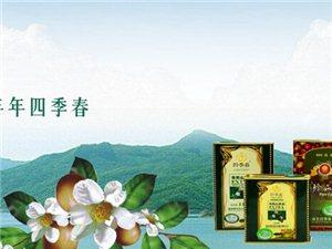 四季春珍品山茶油大促销