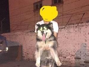 忍痛出售乖狗狗 - 1500元