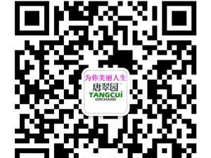 誠招唐翠園水果罐頭蛟河地區代理商