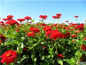 誠售各類花卉種子