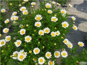诚售各类花卉种子