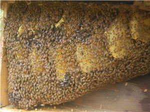 长河刘氏自家养的土蜂蜜