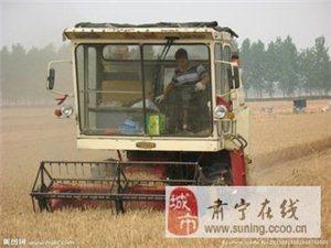 争分夺秒抢收小麦是这个时节最重要的